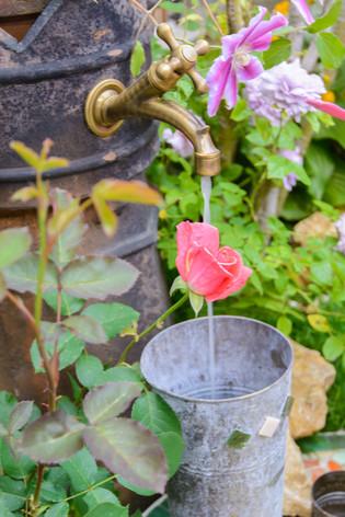 International_roses_gardening_sh_43