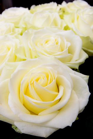 International_roses_gardening_sh_73