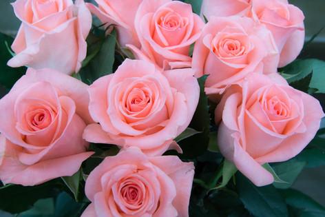 International_roses_gardening_sh_74