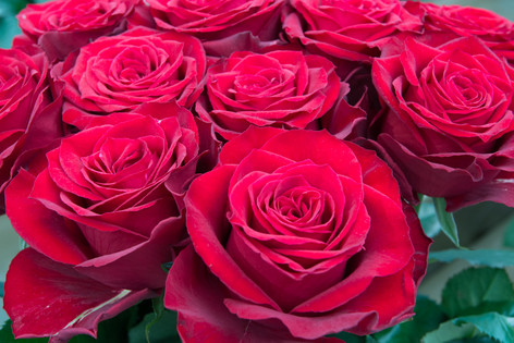 International_roses_gardening_sh_76