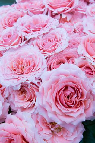 International_roses_gardening_sh_80