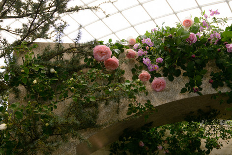 International_roses_gardening_sho_3