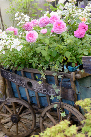 International_roses_gardening_sho_8