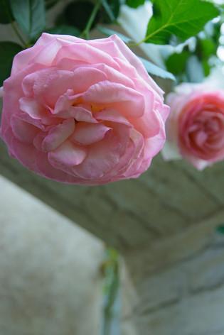 International_roses_gardening_show2