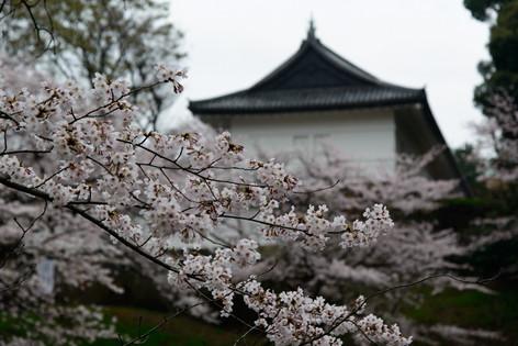 Chidorigafuchi 07