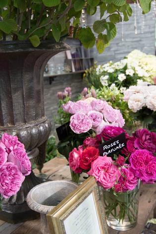 2016_roses_gardening_06