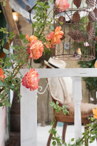 2016_roses_gardening_11