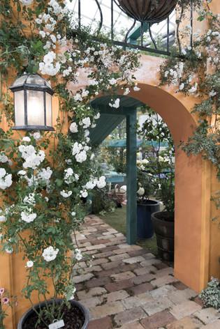 2016_roses_gardening_16