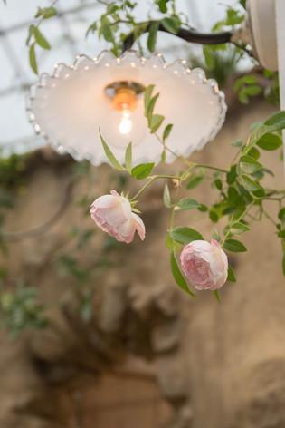 2016_roses_gardening_19