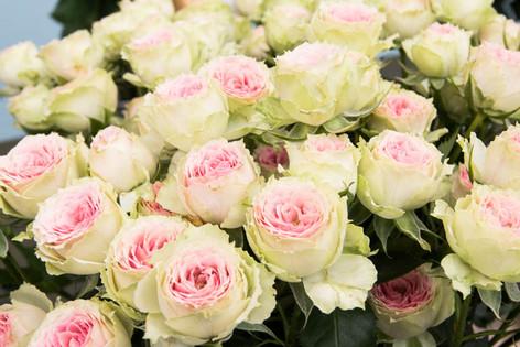 2016_roses_gardening_25