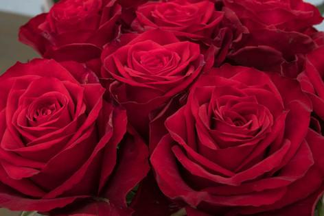 2016_roses_gardening_26