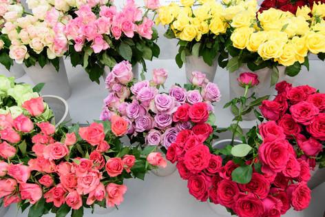2016_roses_gardening_27
