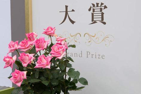 2016_roses_gardening_28