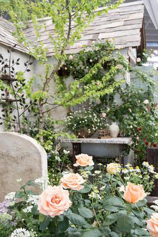 2016_roses_gardening_40