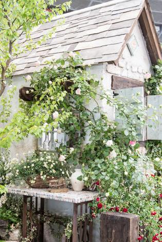 2016_roses_gardening_43