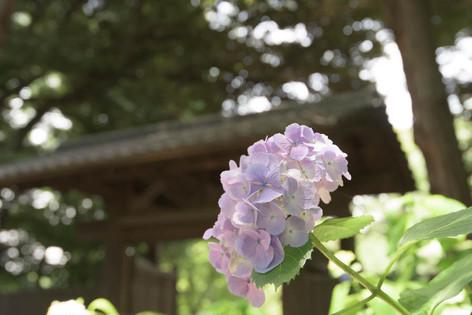Rikugien_gardens_01