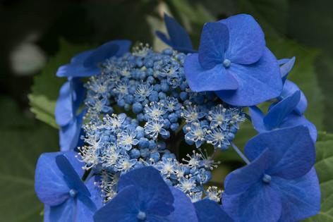 Rikugien_gardens_04