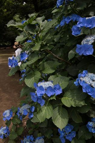 Rikugien_gardens_05
