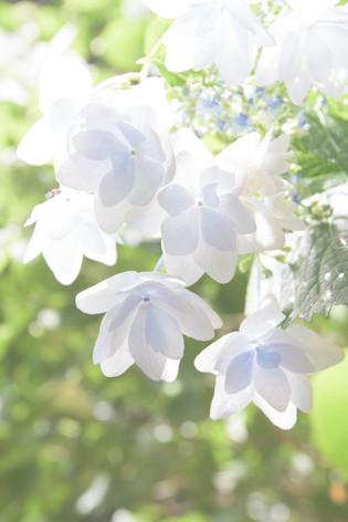 Rikugien_gardens_11
