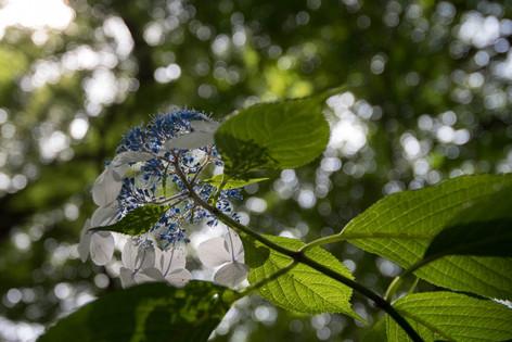 Rikugien_gardens_13
