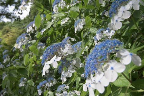 Rikugien_gardens_15