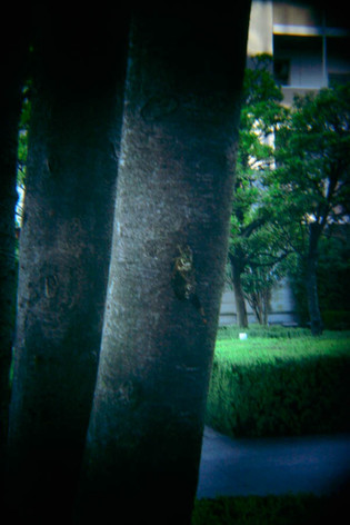 Holga_lens_coastal_city_15