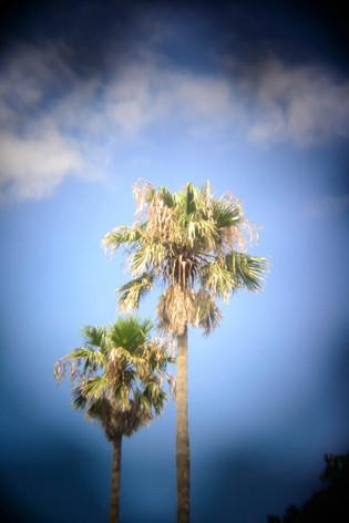 Holga_lens_miura_beach_06
