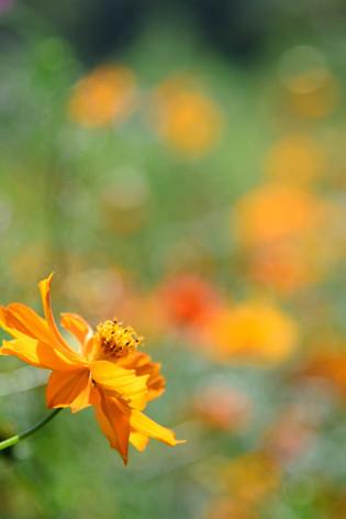 Hamarikyu_gardens_13