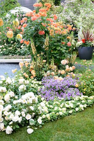 2017_roses_gardening_004