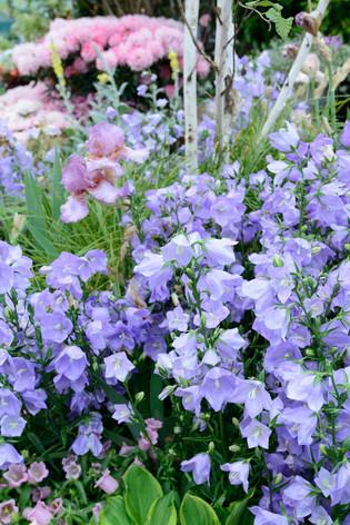 2017_roses_gardening_005