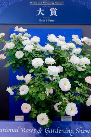 2017_roses_gardening_01