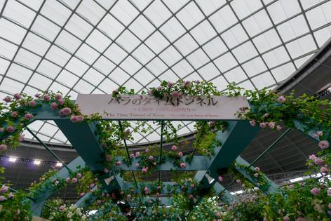 2017_roses_gardening_013