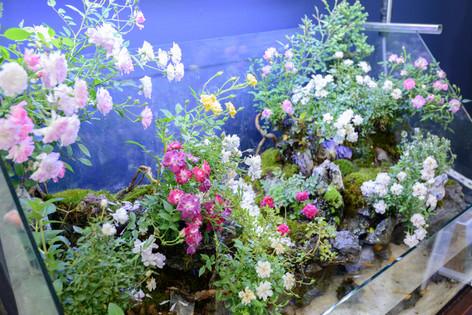 2017_roses_gardening_030