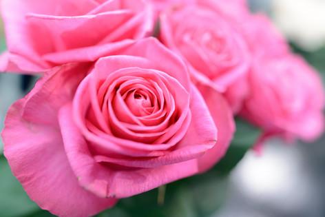 2017_roses_gardening_032