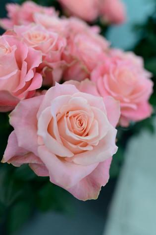 2017_roses_gardening_033