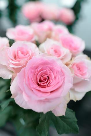2017_roses_gardening_035