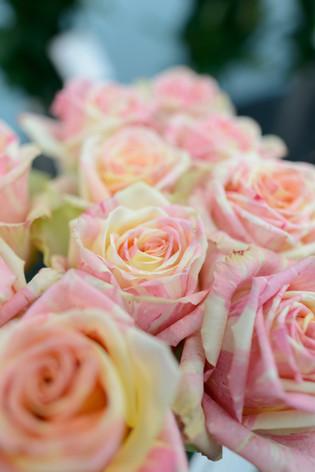2017_roses_gardening_036