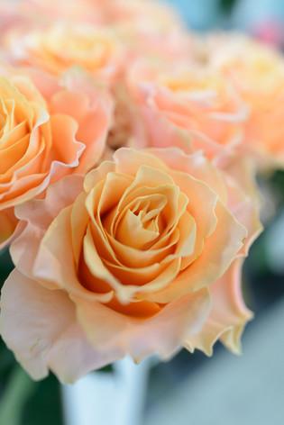 2017_roses_gardening_037