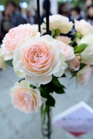 2017_roses_gardening_040