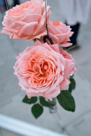 2017_roses_gardening_041