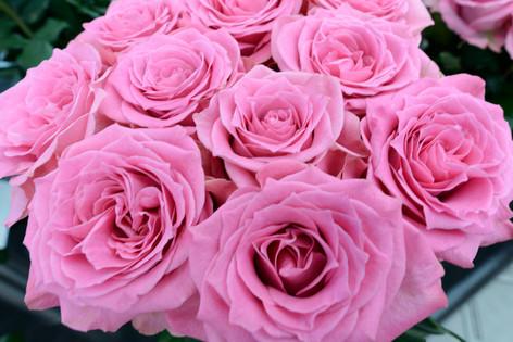 2017_roses_gardening_042