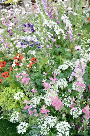 2017_roses_gardening_064