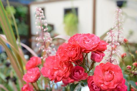 2017_roses_gardening_084