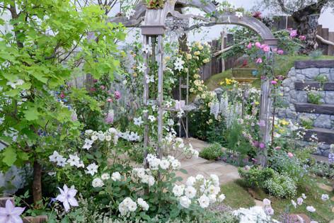 2017_roses_gardening_100
