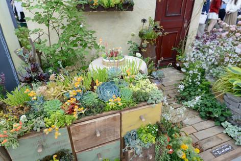2017_roses_gardening_103