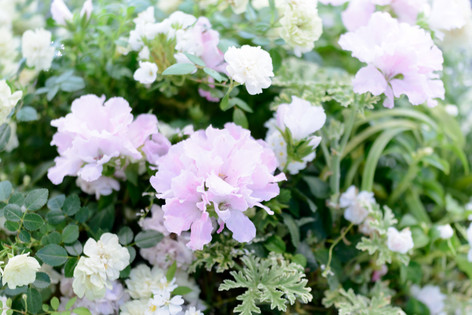 2017_roses_gardening_130