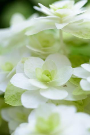 2017_roses_gardening_131