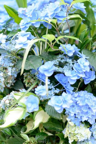 2017_roses_gardening_136
