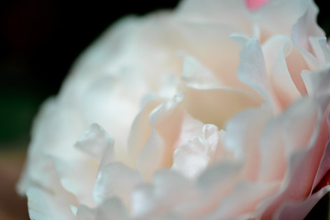 2017_roses_gardening_152
