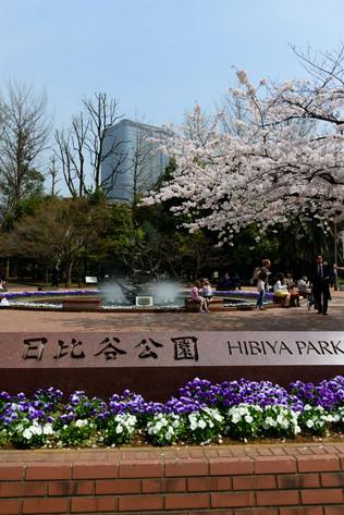 Sakura_flowering_2018_02